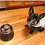 Cute French Bulldog celebrating a birthday with doggie cupcakes!