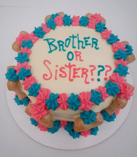 Gender Reveal Dog Cake