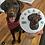 This is a sugar free birthday dog cake for a chocolate labrador.