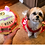 Adorable Roxy and her photo dog cake.