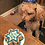 This is a Star of David personalized Bark-Mitzvah cake. Made to order and ships all over.
