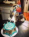 An australian shepherd and his birthday dog cake.