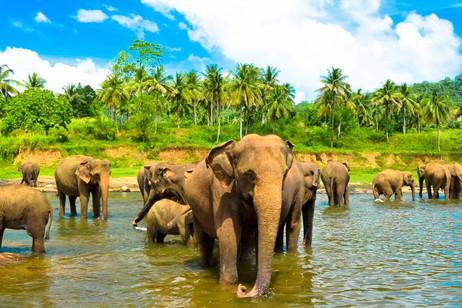 Sri Lanka Picture 4.jpeg