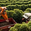 Thumbnail: BRAZIL - Fazenda Freitas - Mundo Novo - Natural Process 250g