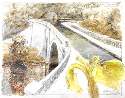 Iris, Dundas Aquaduct