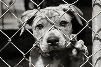 pup_behind_fence.jpg