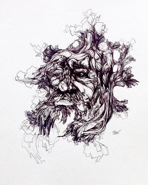 "Quercus macrocarpa, 8""x10"" gloss print"