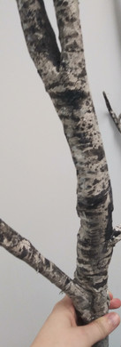 Detail of birch trees