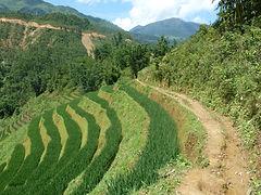 Sapa Trekking Tours trail