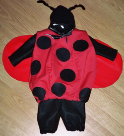 Baby Lady Bug