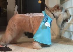 Elsa Dog Side