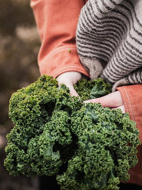 Annie Winter Nutrition, Nutrition, Nutritionist, Kale, Vegetables, Wellness, Healthy, Lifestyle, Vegan, Vegetarian, Diet