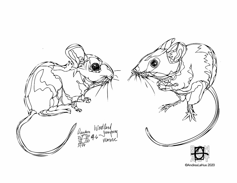 Jumping Mouse coloring pages by Andrea LaHue