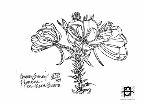 Curious Coloring Pages, Evening Primrose, Opossum, Dragon Fun