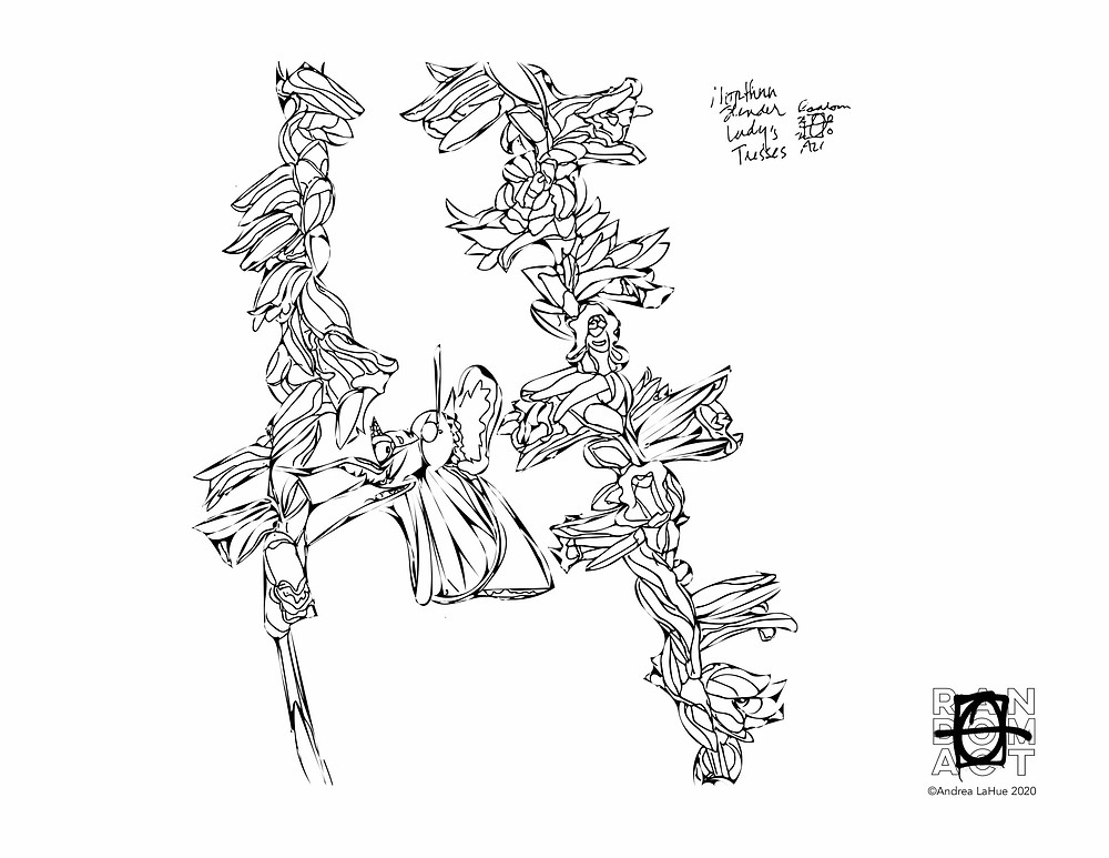 Lady Tresses coloring page by Andrea LaHue