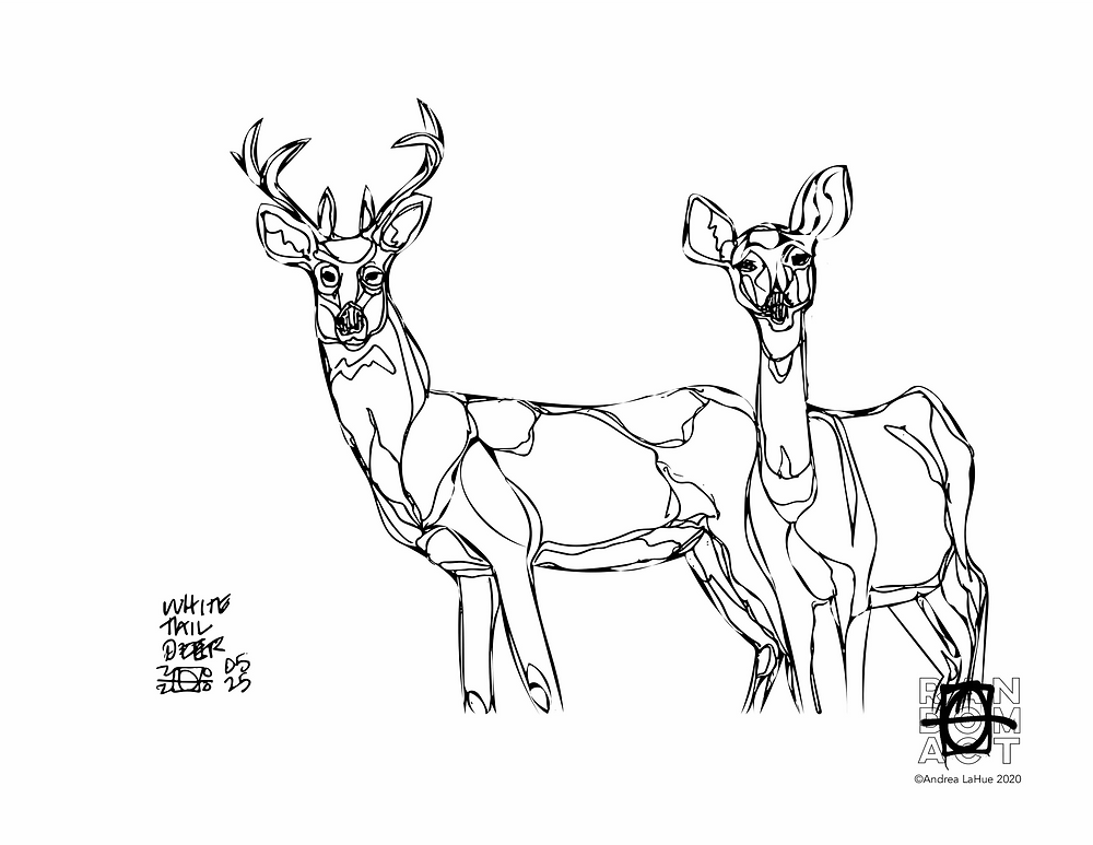 white tail deer coloring page by Andrea LaHue