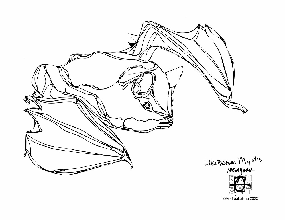 bat coloring page by Andrea LaHue