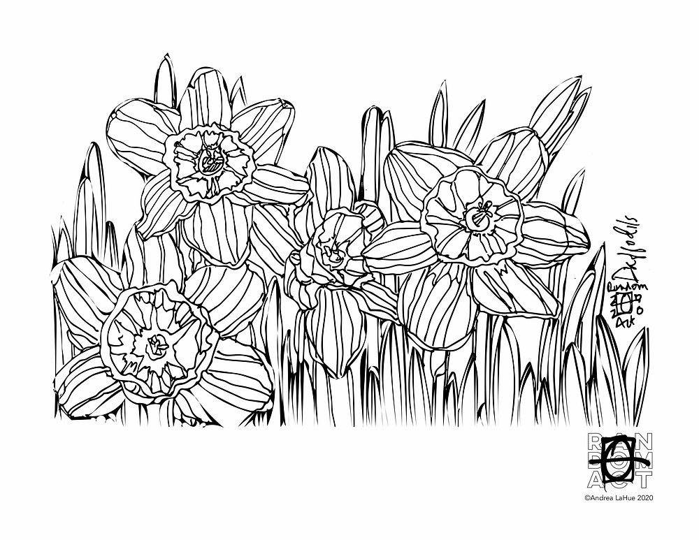 daffodil coloring page by Andrea LaHue