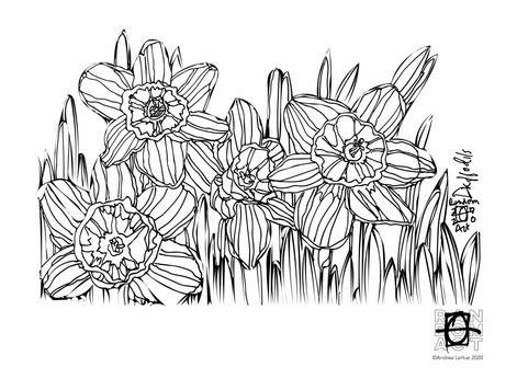 Curious Coloring Pages, Daffodils, Oyster Catcher, Dragon Fun