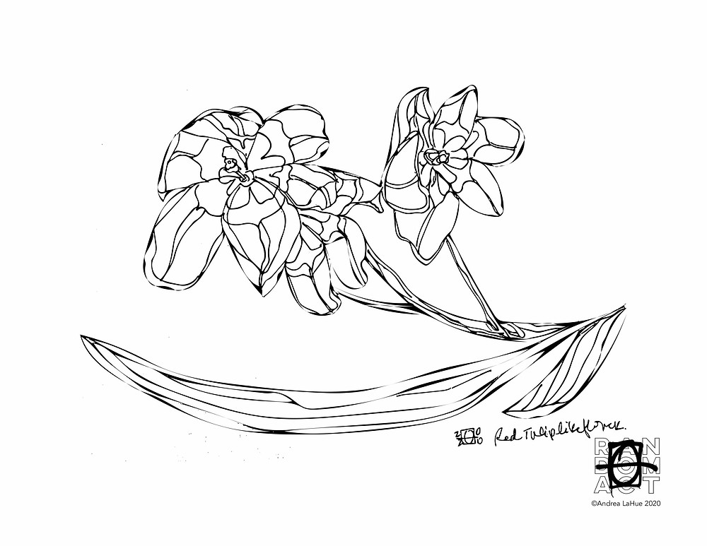 crocus coloring page by Andrea LaHue
