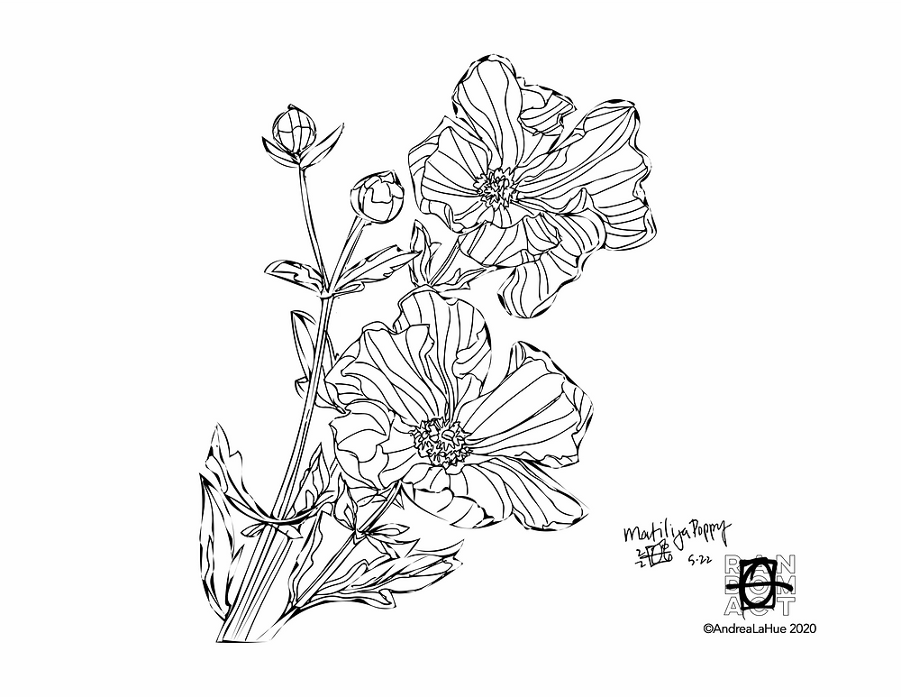 Matilija Poppy coloring page by Andrea LaHue