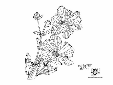 Curious Coloring Pages, Matilija Poppy, Grevy's Zebra, Dragon Fun