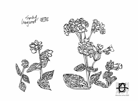 Curious Coloring Pages, Lungwort, Dolphin, Dragon Fun