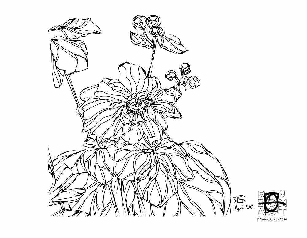 Cherokee Rose coloring page by Andrea LaHue