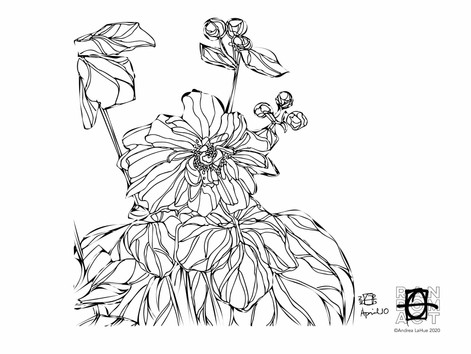 Curious Coloring Pages, Cherokee Rose, Otters, Dragon Fun