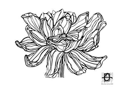 Curious Coloring Pages, Lotus, Bugs, Dragon Fun
