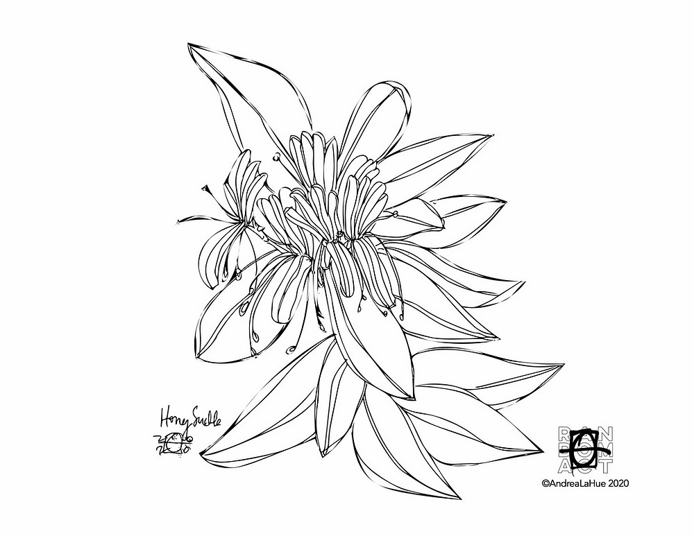 Honeysuckle coloring page by Andrea LaHue