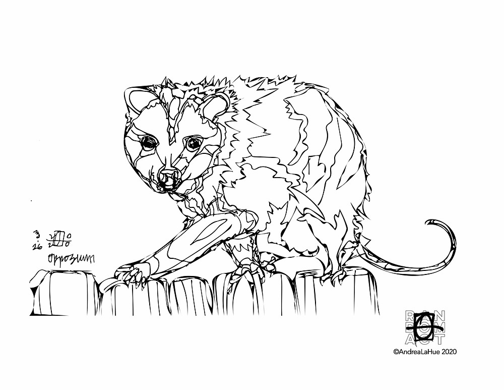 Opossum coloring page 033120 by Andrea LaHue
