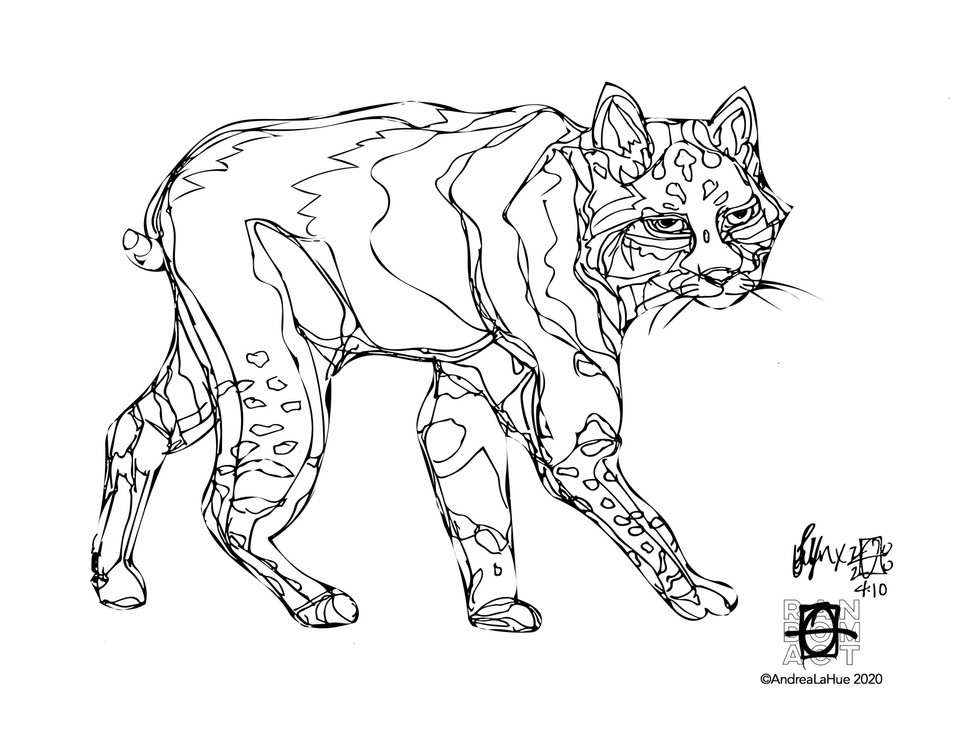 Curious Coloring Pages, Pansy, Lynx, Dragon Fun