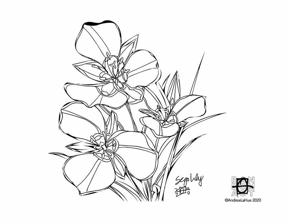sego lily coloring page by Andrea LaHue