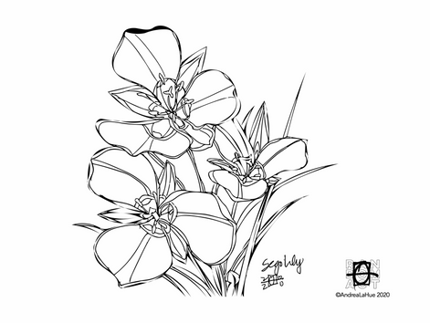 Curious Coloring Pages, Sego Lily, Egret, Dragon Fun