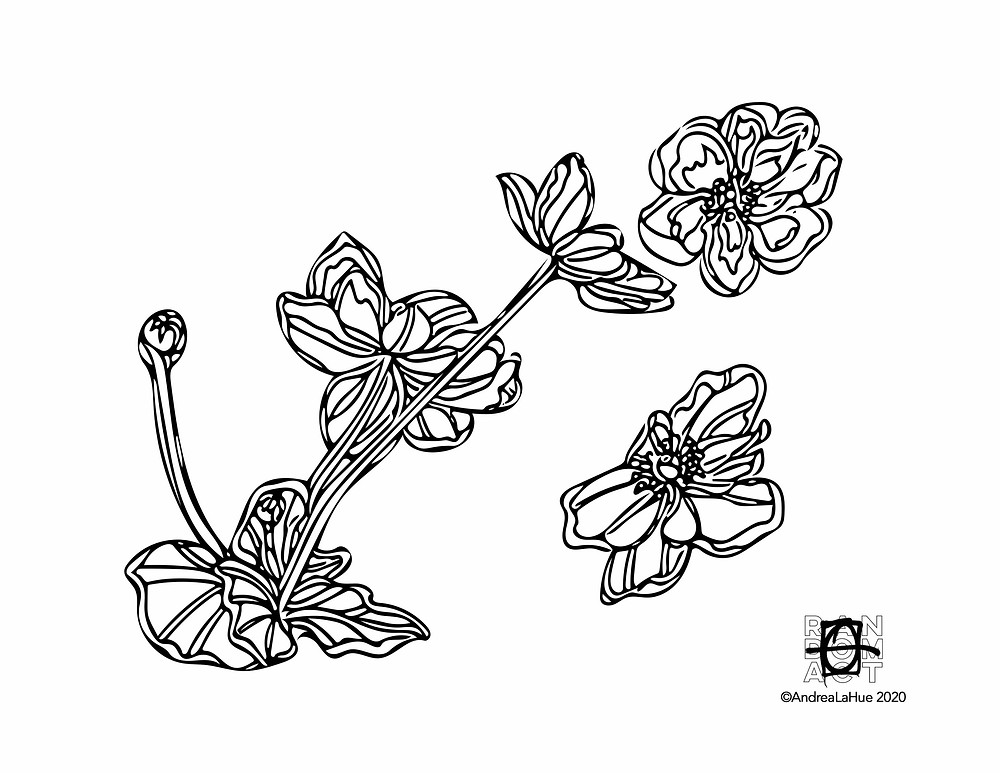 Primrose coloring pages by Andrea LaHue