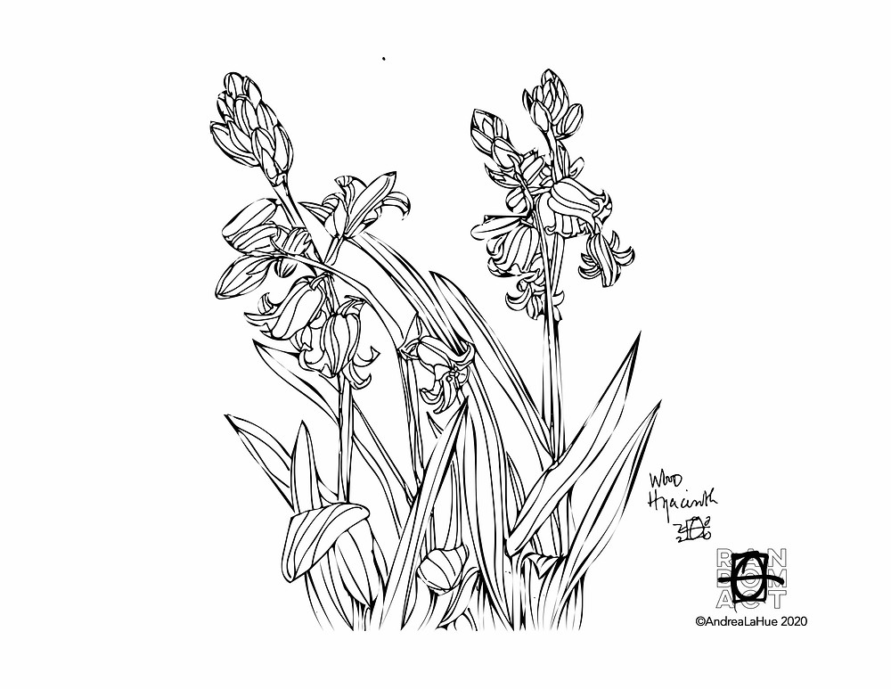 Hyacinth coloring page by Andrea LaHue