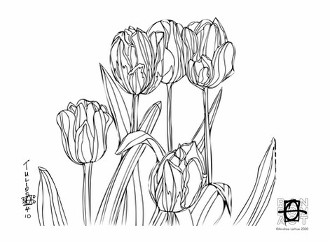 Curious Coloring Pages, Tulips, Kit Fox, Dragon Fun