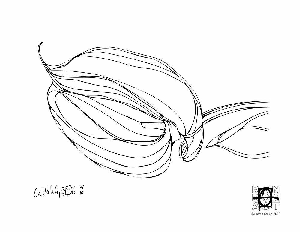calla lily coloring page by Andrea LaHue