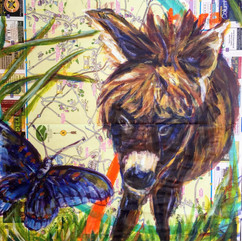 hudson valley mini donkey