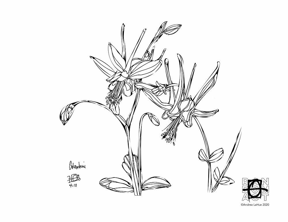Columbine Coloring Page by Andrea LaHue