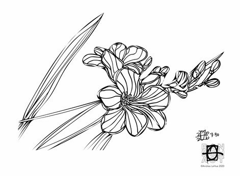 Curious Coloring Pages, Freesia, Cottontail, Dragon Fun