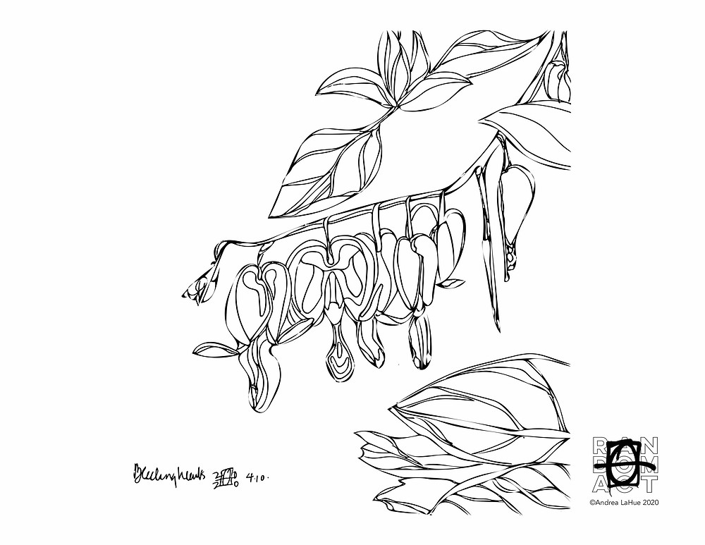 Bleeding Heart coloring pages by Andrea LaHue