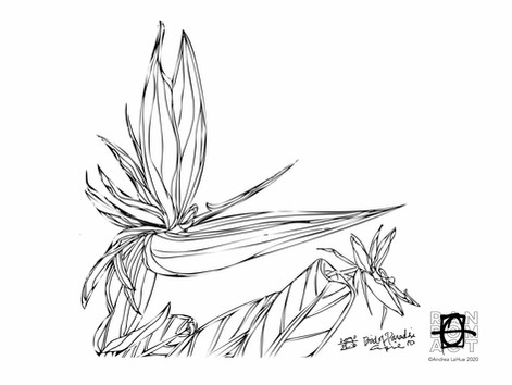 Curious Coloring Pages, Bird of Paradise, Sloth, Dragon