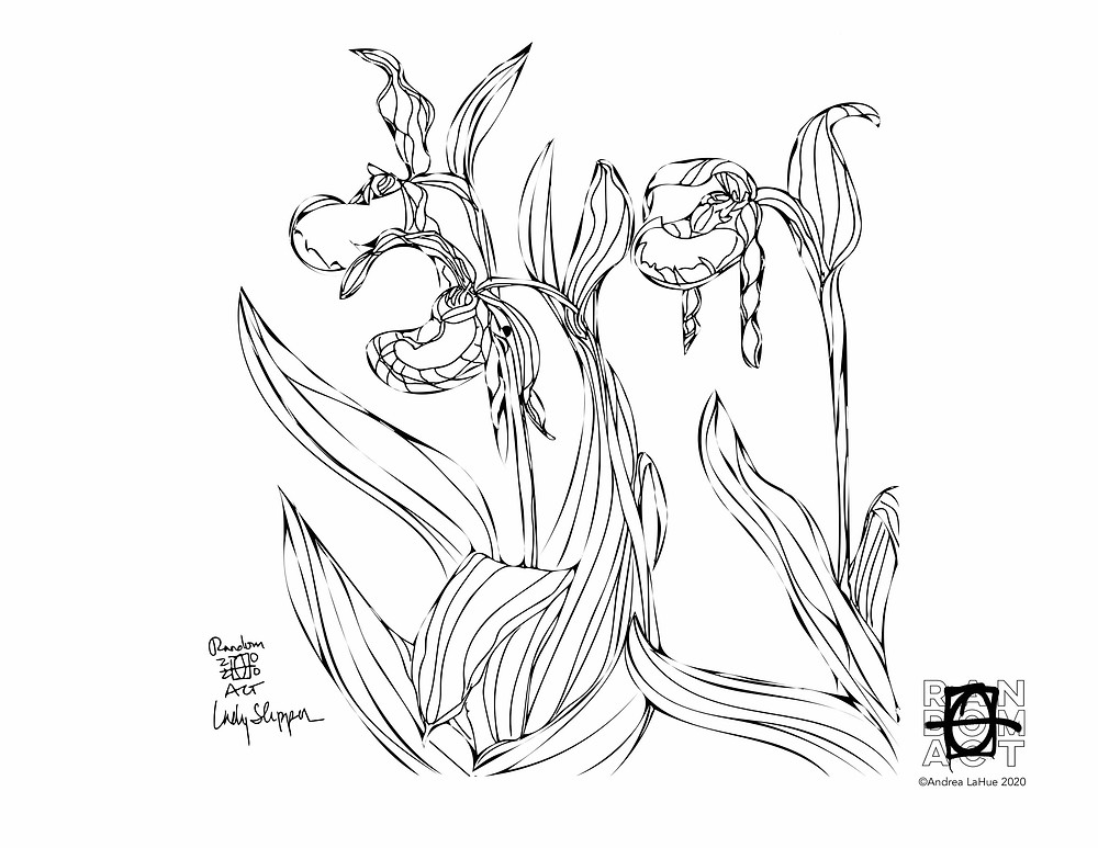 Lady slipper coloring page by Andrea LaHue