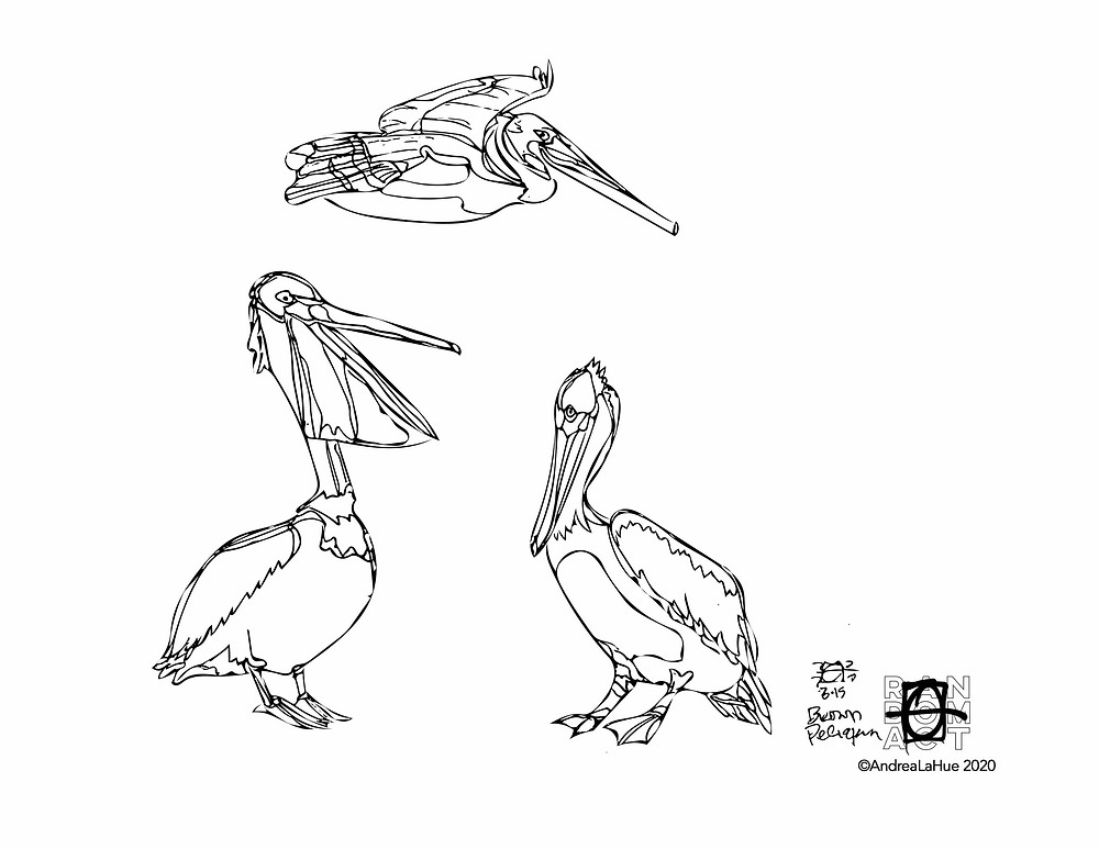 Pelican coloring page by Andrea LaHue