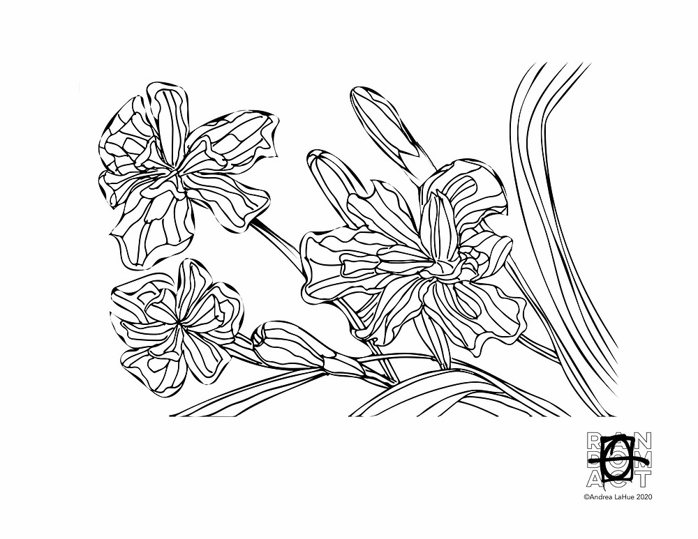 White African Iris Coloring Page by Andrea LaHue