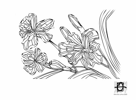 Curious Coloring Pages, African Iris, Fence Lizard, Dragon Fun.