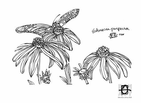Curious Coloring Pages, Echinacea, Katydid, Dragon Fun