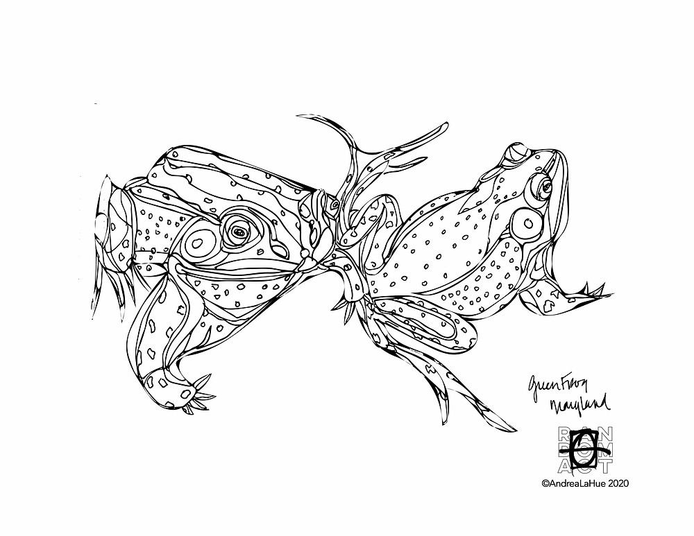 Green Frog Coloring Page by Andrea LaHue